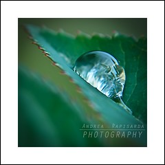 My world in a raindrop (Andrea Rapisarda) Tags: macro nature water rain square leaf nikon eau dof zoom bokeh natura frame tele foglia acqua pioggia raindrop goccia sfocato d7000 andrearapisarda