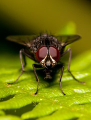 Unidentified Fly