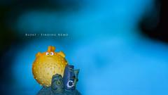 "Bloat (""Buscando a Nemo"" Series) (yeryi) Tags: lighting blue light sea fish pez macro water smile azul happy mar agua nikon nemo flash sb600 sigma disney pixar sonrisa 105 findingnemo hapiness cls miniseries bloat 105mm buscandoanemo d90 strobist nikoncls sb900"