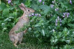 rabbit 134