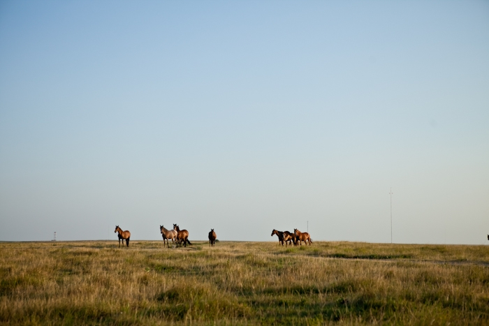 Horses At The Lodge