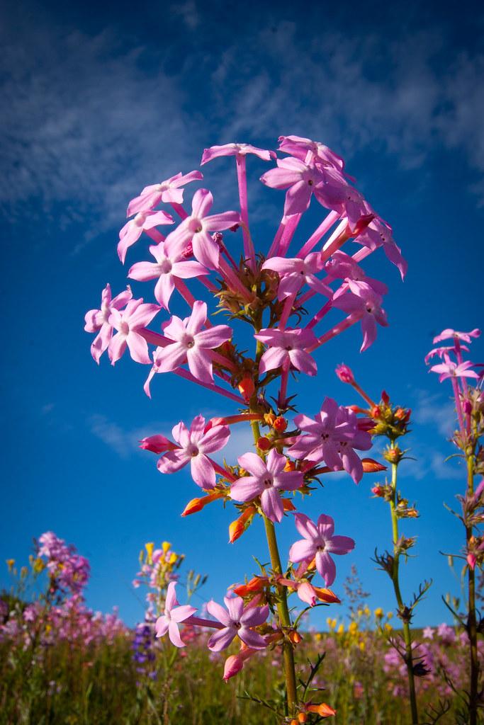 Mountain flowers-2.JPG