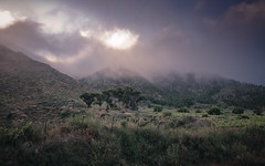 Santiago del Teide - Tenerife (JoHu) Tags: trees wallpaper vacation sky color green nature colors clouds canon landscape island spain colorful europa europe honeymoon outdoor natur himmel wolken tenerife landschaft teneriffa farbe bume gruen draussen santiagodelteide