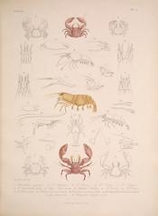 Anglų lietuvių žodynas. Žodis snapping shrimp reiškia fotografuoja krevečių lietuviškai.
