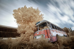 Last Station (FX-1988) Tags: red bus abandoned station last vintage ir israel junk wreck scrap infra hdr leyland hoya r72 77mm abigfave flickrdiamond