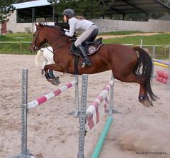 Brandenburg Socialite (neulands) Tags: horse cheval mare 5 years brandenburg pferd showjumping socialite springen stute neulandstud