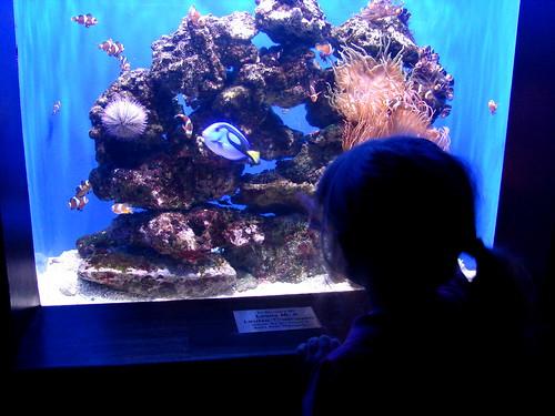 Aquarium Pic 4