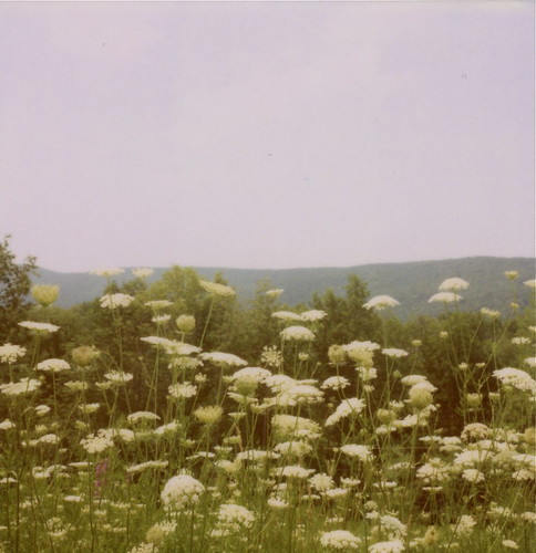 I have a thing for queen anne's lace.