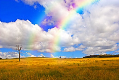 A field of Rainbows (EXPLORED) (edwinemmerick) Tags: blue light sky cloud tree 20d field grass weather canon landscape dead eos golden rainbow australia nsw edwin emmerick edwinemmerick