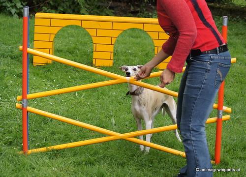 Mischlingshund NISHA aus Kroatien - sheltatassonet