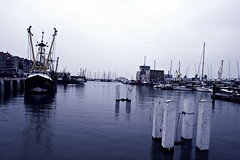 porto (t/here) Tags: blue sea fish cold water sadness eau mare market northsea poisson freddo marche tristesse nordzee maredunord