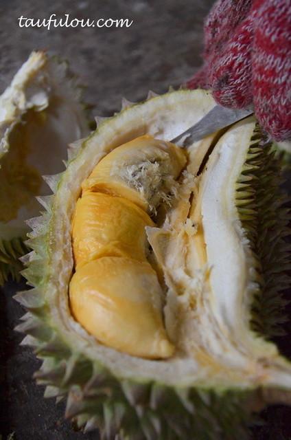balik pulau durian (8)