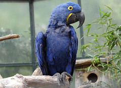 Der blaue Vogel (Digitalholgi) Tags: test animals zoo tiere zoom sony filter krefeld freehand holger freihand kameratest neutraldichte hx100v