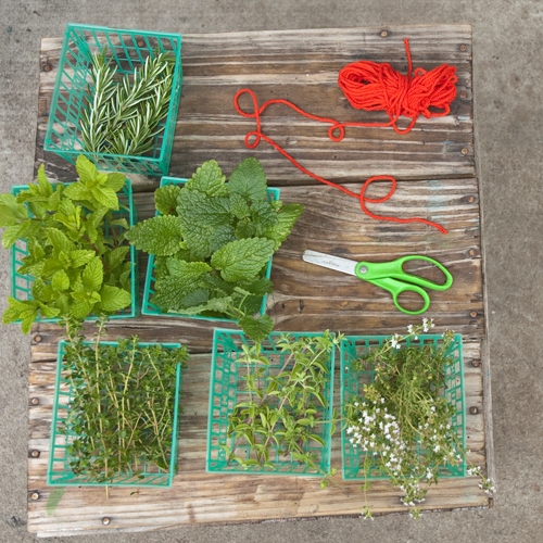 harvesting herbs blog sq.jpg