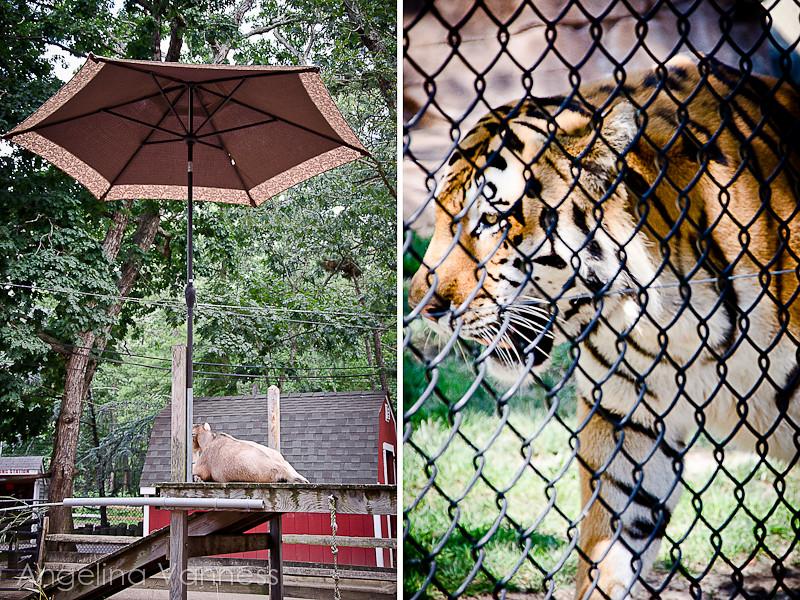 Cape May Zoo43-Edit