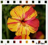 colores (:: hibrisss ::) Tags: españa naturaleza verde canon eos flora flor 1855mm fresnillo 400d eos400d canoneos400d canon400d hibrisss