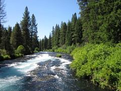 Deschutes National Forest - Oregon (Dougtone) Tags: tree pine oregon river cascades deschutesnationalforest metoliusriver 080111