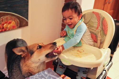 Baby Feeds Dog