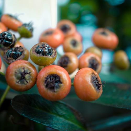 Tiny Autumn Berries