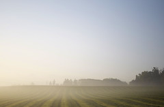The Fog (s_mahela) Tags: morning fog schweiz switzerland nebel sunday feld sonnenaufgang morgen sonntag