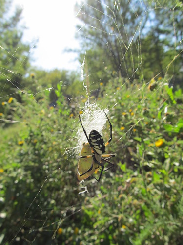 Golden Orb with butterfly