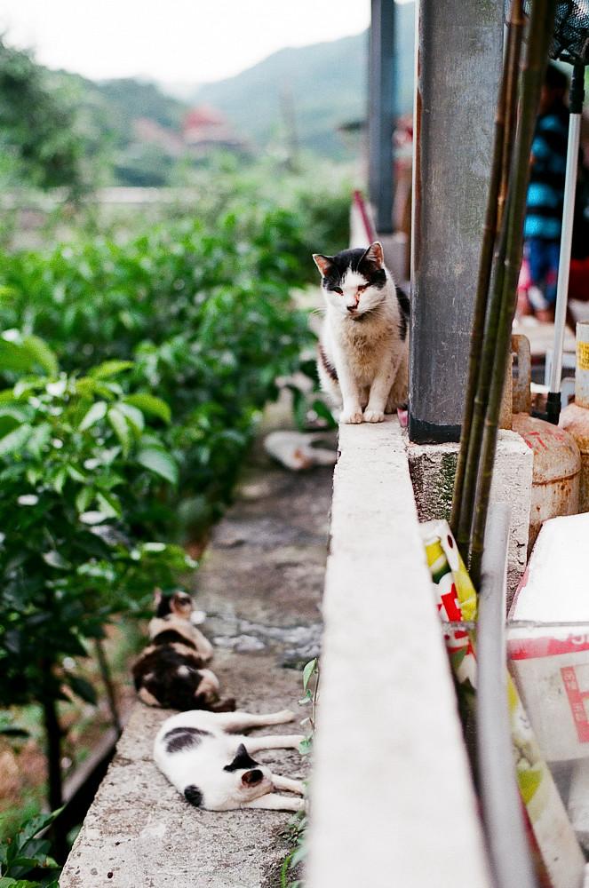 SFX+FA50下的風景,貓,生活