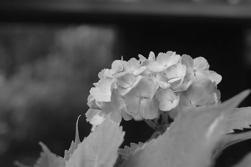 2011.07.13(R0012879_50mm_Silver Efex