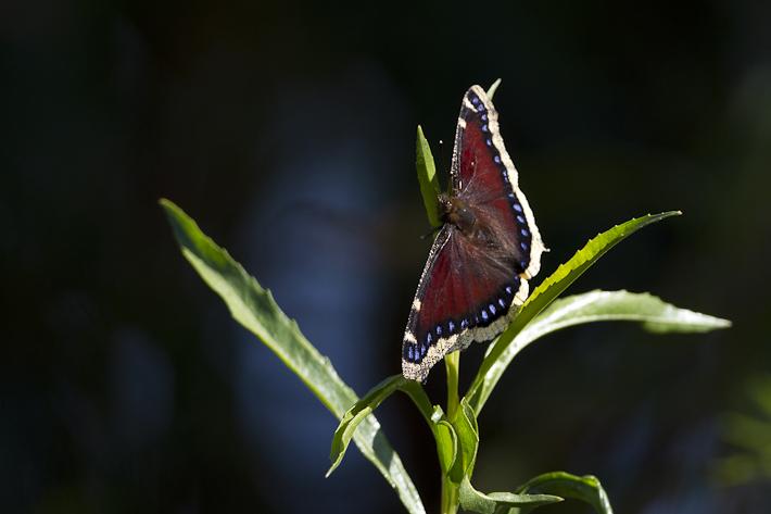 070911_butterfly