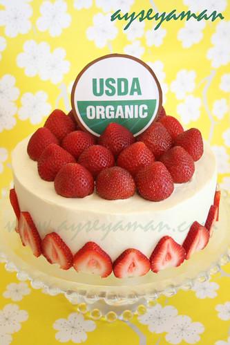 organik pasta