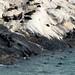Colonias de lobos marinhos