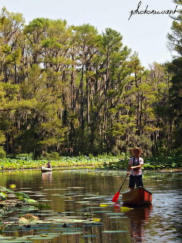 Caddo Lake – Uncertain, Texas