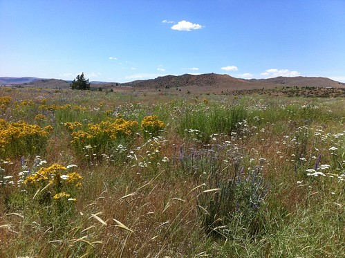 nespelem meadow by teach.eagle