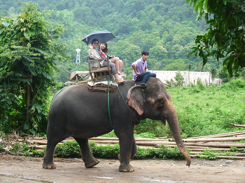 Viaje para adultos chiang mai