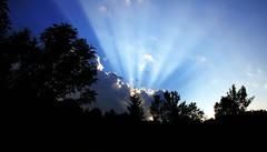 [フリー画像] 自然・風景, 空, 樹木, 日光・太陽光線, 201107231300
