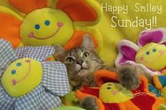 Happy Smiley Sunday!!! (KrazyBoutCats) Tags: cats pets smile animals sunday felines happysunday