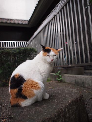 上野公園 猫