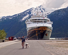 Guide and Dog [Explored] (Peter E. Lee) Tags: cruise summer vacation dog mountain alaska port ship busdriver ak disney skagway trent stbernard disneywonder dcl disneycruiseline 2011 disneyphotochallenge disneyphotochallengewinner