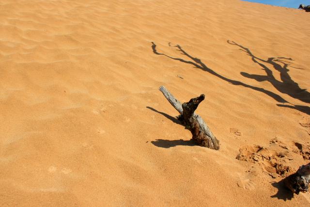 the dunes 14