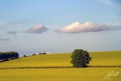 On the Road to Bath Spa (gwhiteway) Tags: greatbritain travel tree green london tourism field bath unitedkingdom farm spa drivebyshooting canon7d tamron18270 artistoftheyearlevel3 artistoftheyearlevel4