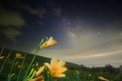 Galactic lily (masahiro miyasaka) Tags: trip flowers blue summer sky alps flower tree beautiful yellow japan night canon wonderful stars eos iso3200 star lily galaxy astrophotography  wallpapers alpen  oneshot milkyway startrail   14mm hemerocallidaceae  samyang earthandspace  1dmarkiii Astrometrydotnet:status=failed peopleandspace bestnewcomer competition:astrophoto=2012