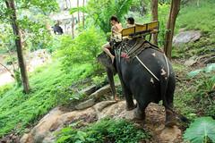 Phuket Elephant Trek