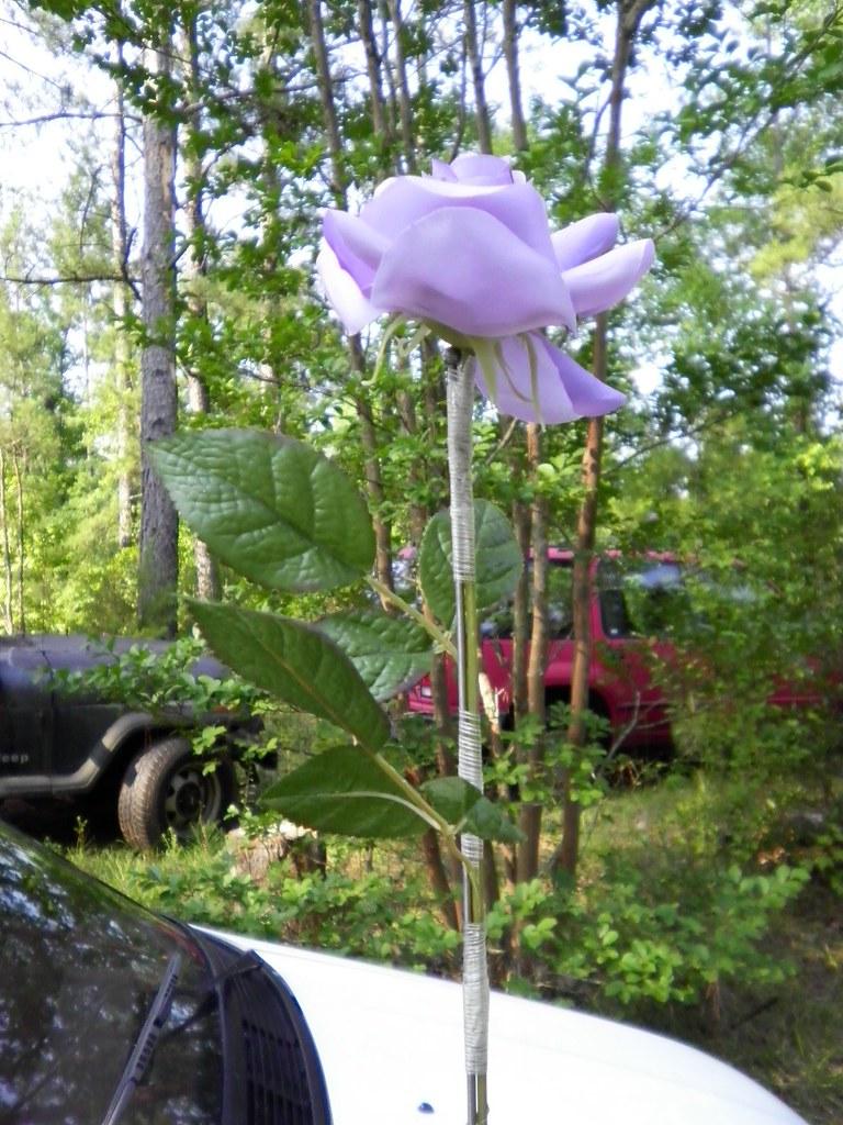 182/365:  Antenna Rose