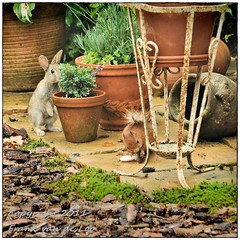 Breakfast-time (Frank van de Loo) Tags: rabbit squirrel konijn conejo coelho esquilo lapin ardilla eichhrnchen scoiattolo coniglio cureuil eekhoorn sciurusvulgaris kanin dsc5916 kaninskinn