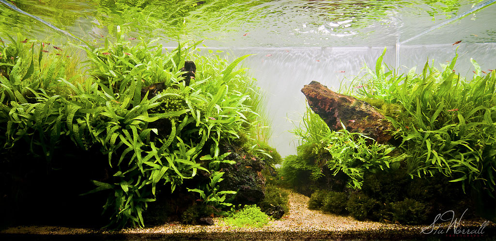 Stu's 90x45x45 Dragon Stone Scape | AquaScaping World Forum