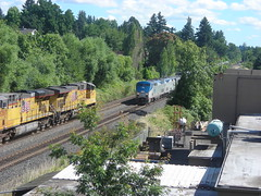 A northbound Coast Starlight passes a waiting Yellow Menace freight