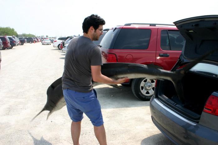 fish_car3