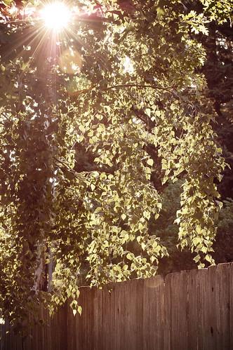 209_365 07-27-11 Golden vintage
