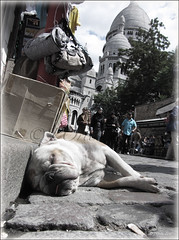 RESTE  MONTMARTRE (JLuisOrtn (**Running Slow**)) Tags: street dog france color colour vertical calle montmartre perro sacrcoeur rest francia sueo pars bolsos shoulderbags josortn