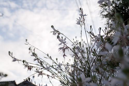 庭から空を撮ってみた