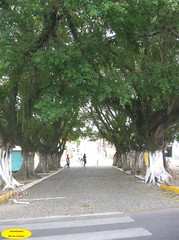 Corredor (Janos Graber) Tags: pessoas rua lorena rvores lorenasp
